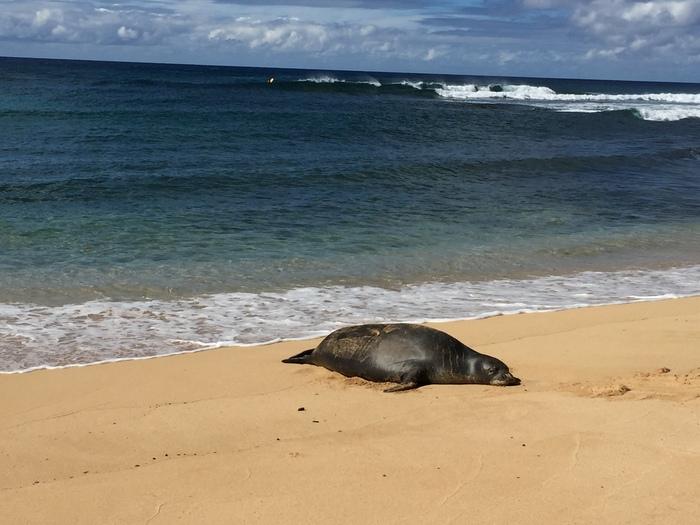 15 Things to Do in Kauai