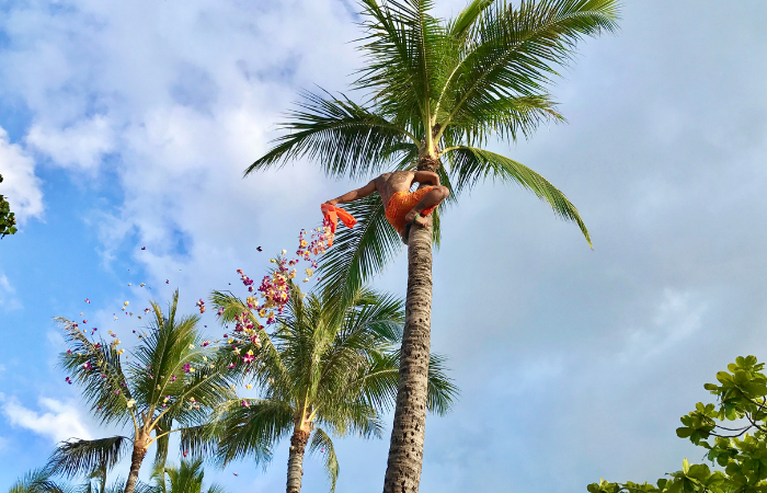 15 Things to Do on Oahu | Polynesian Cultural Center