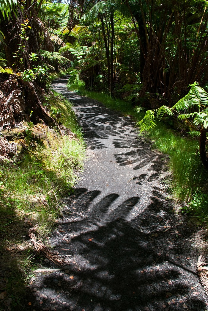 The very best things to do on Hawaii: hike through fern valley