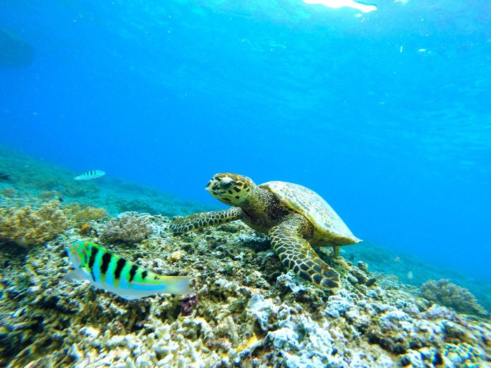 My favorite Maui snorkeling spots plus where to find sea turtles.