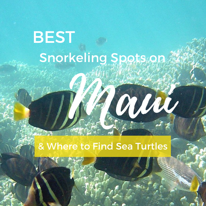Best Snorkeling in Maui (+ Where to Find Sea Turtles)