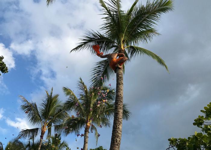 15 Things to Do in Oahu | Paradise Cove Luau