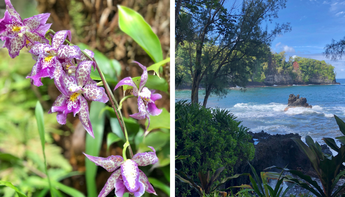 25 Things to Do in Hilo, Big Island - Hulaland