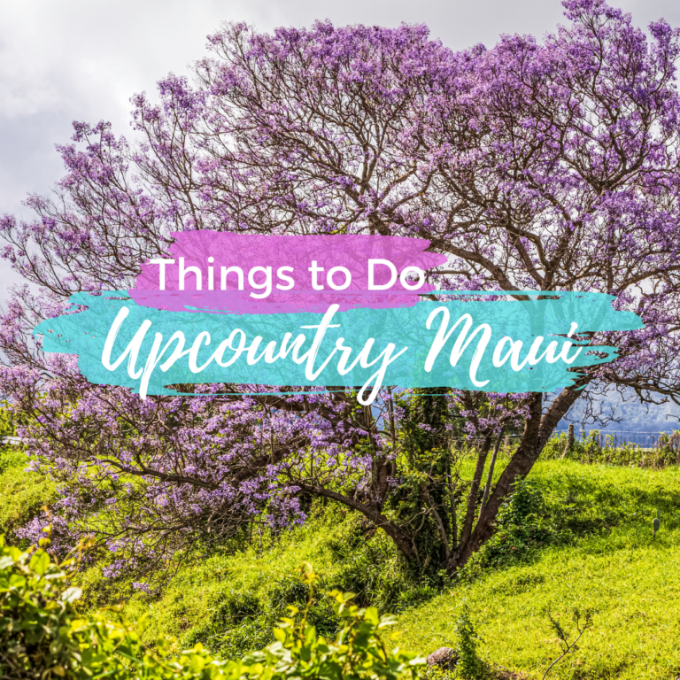 My Favorite Things to Do Upcountry Maui