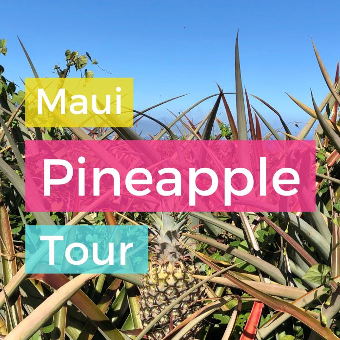 Maui Pineapple Tour!