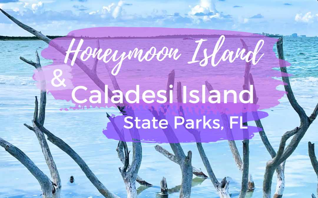 Everything You Need to Know about Honeymoon Island & Caladesi Island State Parks