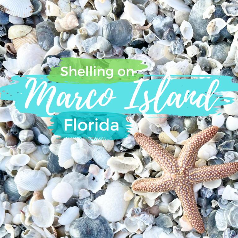 Marco Island Shelling