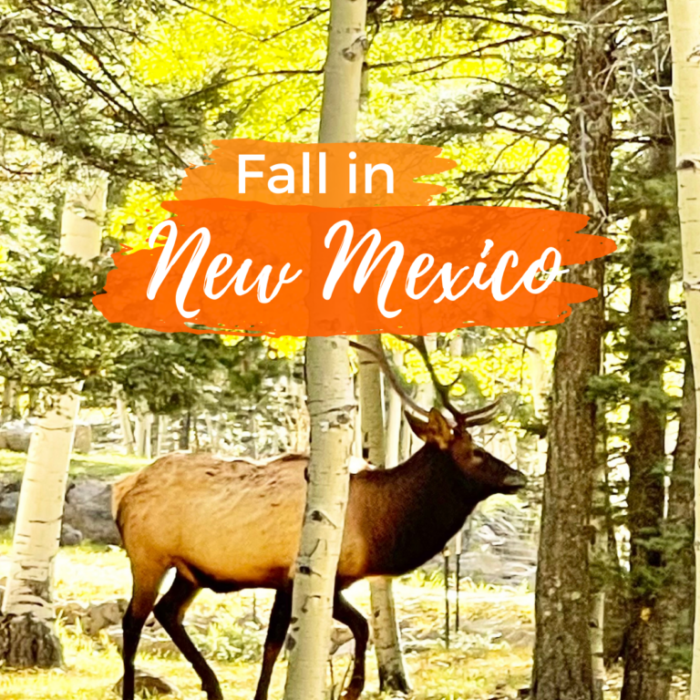 Fall in New Mexico